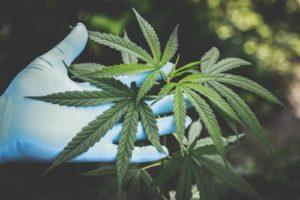 marijuana attorney austin